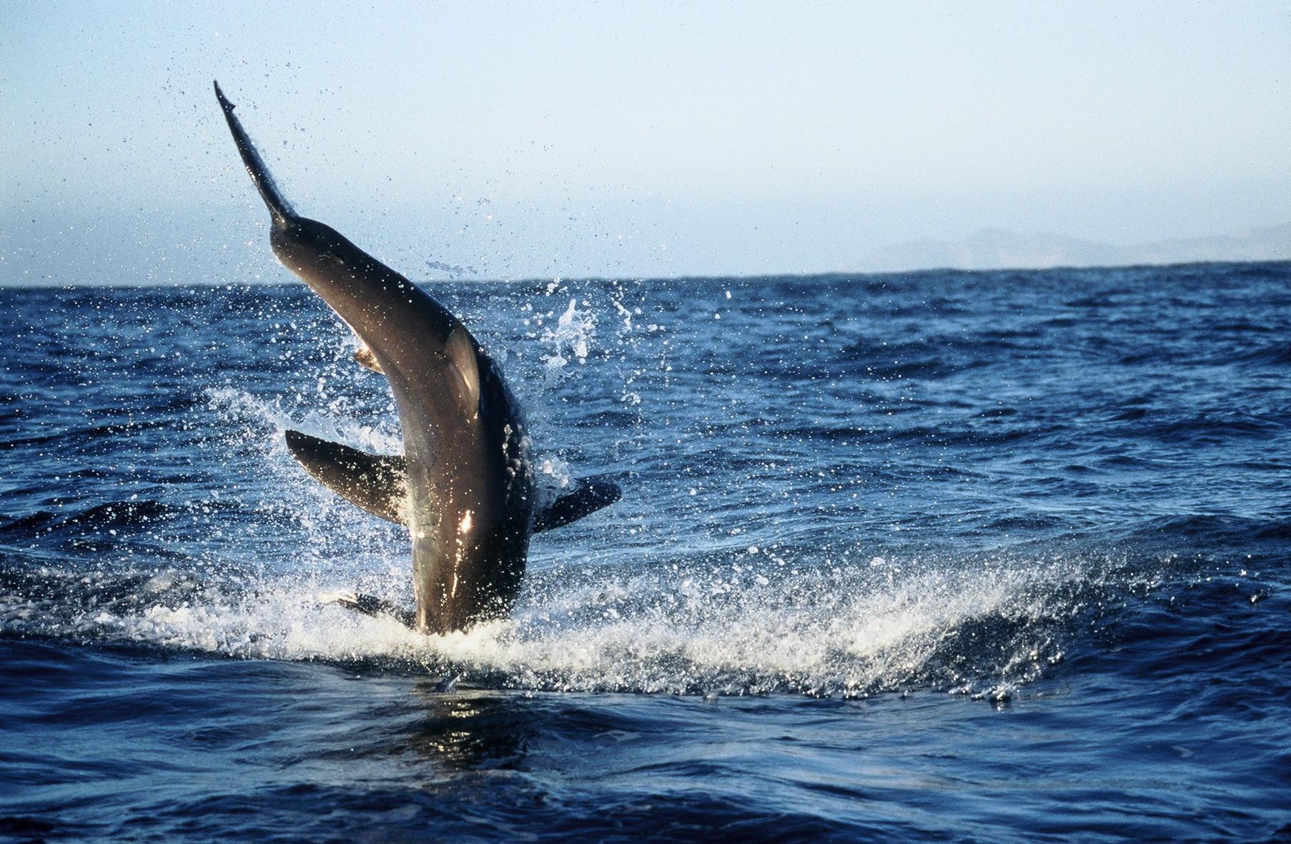 Sito di incontri sul serbatoio di squalo