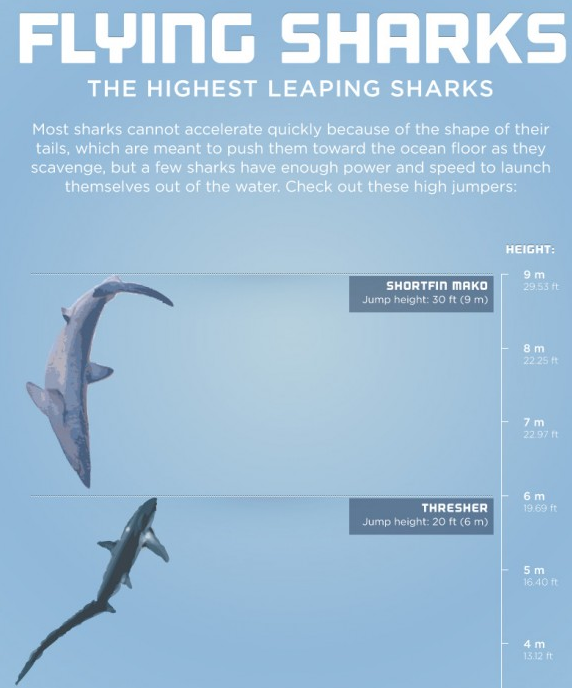 Flying_Sharks